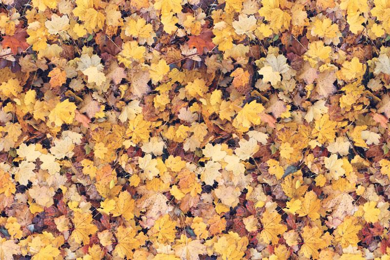 Messeteppich bedruckt Blätter