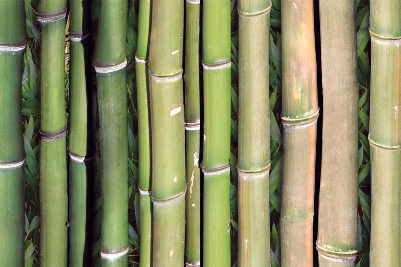 Messeteppich bedruckt Bambusoptik